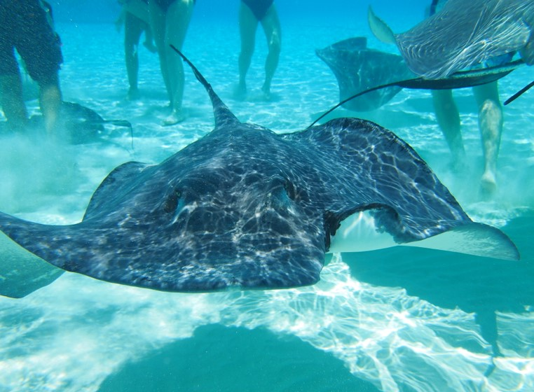 best family caribbean cruise stingray