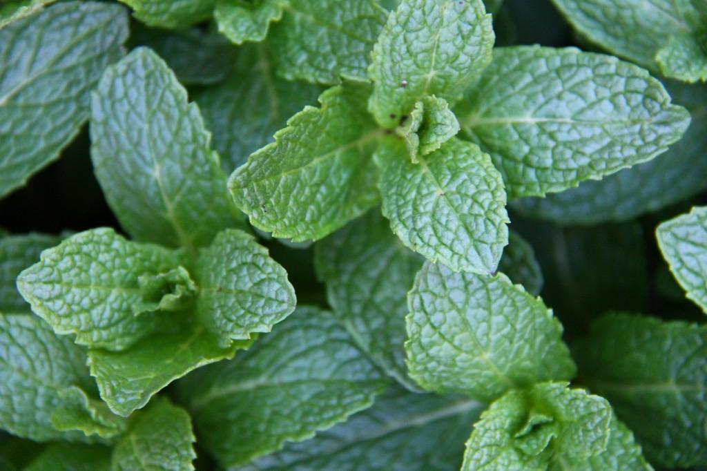 mint for dark greens smoothie