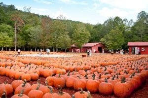 fall day trips from Atlanta 2