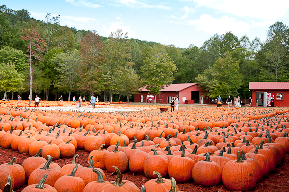 fall day trips from Atlanta 2