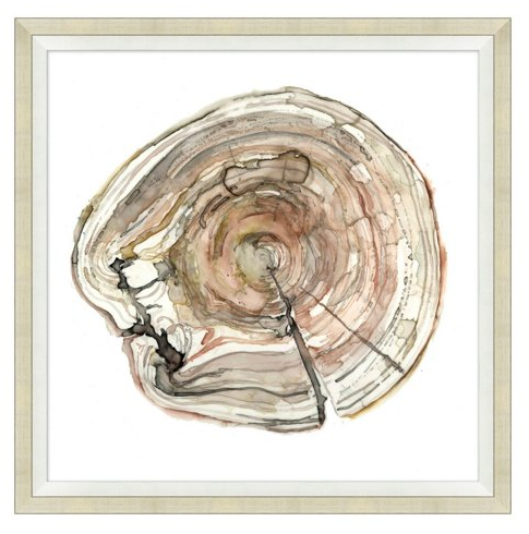 Tree Ring Watercolor Sumptuous Living Home Decor